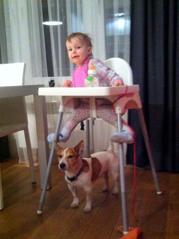 Pod krzesłem mieści się Jack Russel Terrier.